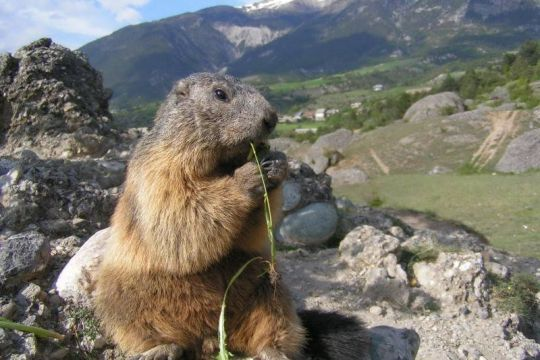 Sentier des marmottes